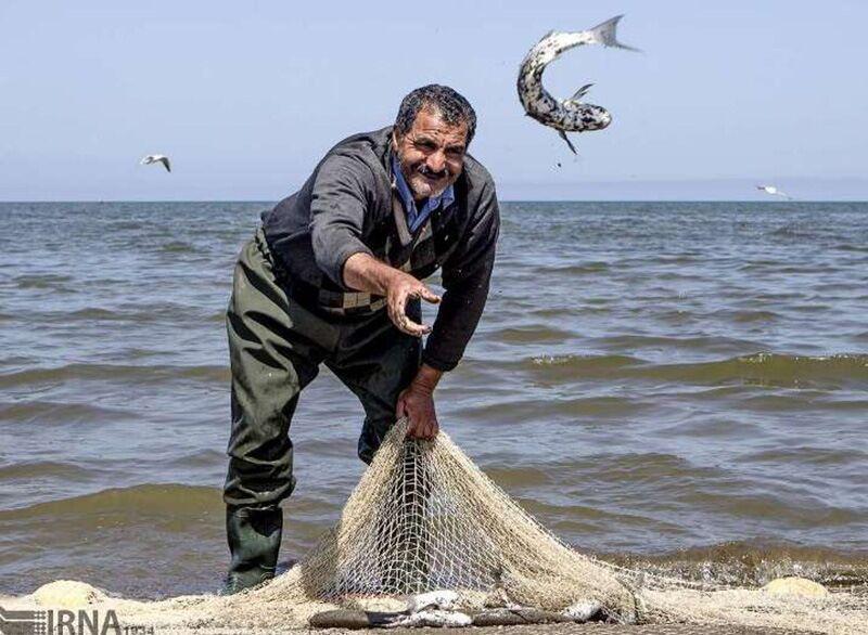خبرنگاران صید ماهی استخوانی در گلستانی 24 درصد بیشتر شد